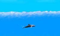 Jeux de dauphin