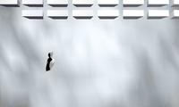 Arkanoïd pingouin