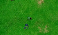 Guerre coléoptère