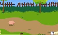 Jeux de cochon