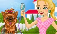Spa pour chiens